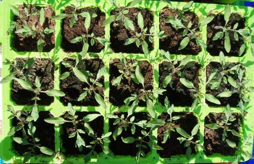 How far Apart to Plant Tomatoes in a Raised bed | Tomato Plant Spacing Raised Bed | Vegetable ...